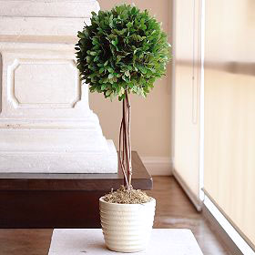 Boxwood globe topiary, photo